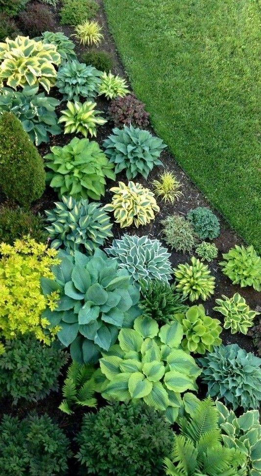 Pin Von Laura Hall Auf Design Landscape Garten Wohnen Und Garten Pflanzen