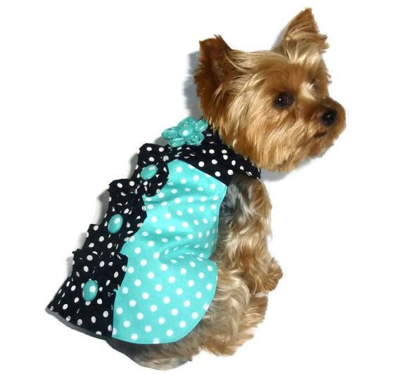 Free Pet Clothes & Accessories | Zazzle