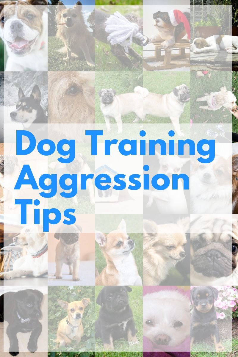 In Need Of Dog Training Aggression Tips Advice Check Out This