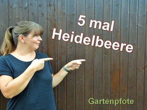 5 tipps rund ums thema heidelbeeren im garten youtube garten pinterest garten garten. Black Bedroom Furniture Sets. Home Design Ideas