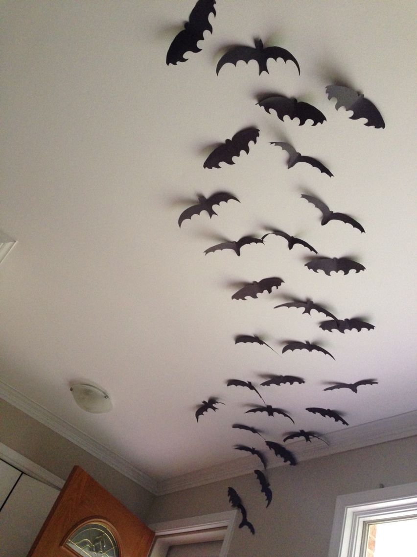 Bats on ceiling