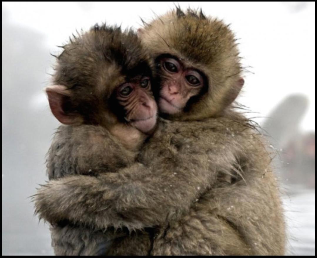 c'est beau l'amour Animals, Animals friendship, Cute animals