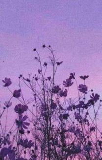 under the stars (kiyoko x fem reader)