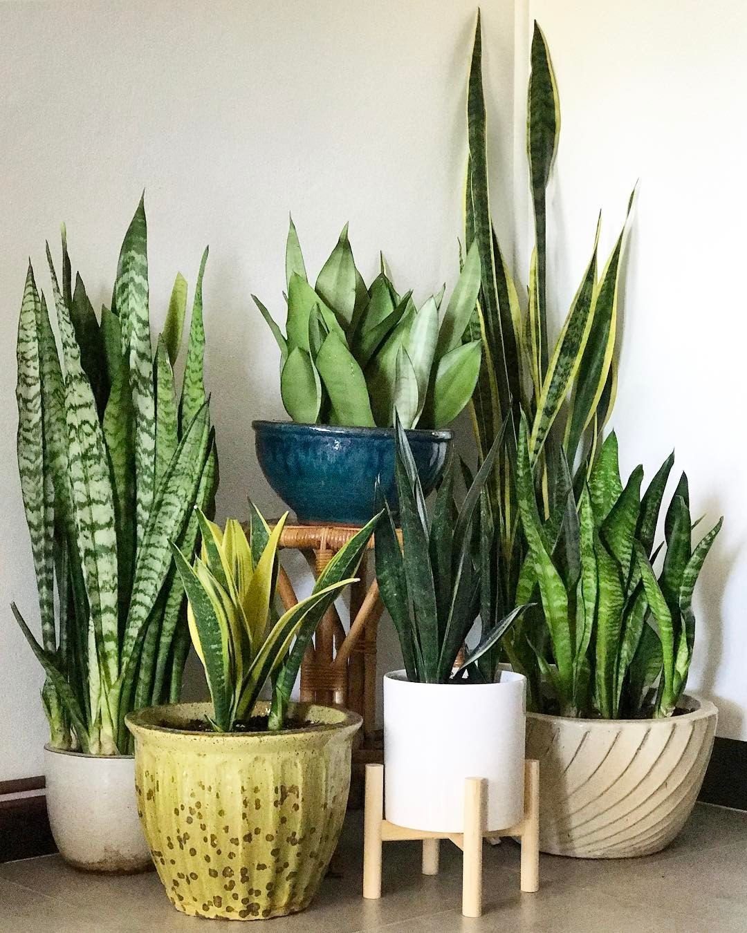 Indoor Plant Types Pin By Stephanie Gamarra On C A S I T A Pinterest