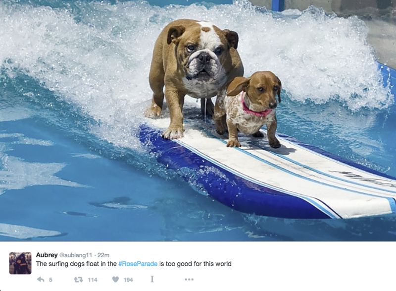 Parade Of The Day The Rose Parade Has A Float With Surfing Dogs Yes Surfing Dogs Dogs Canadian Dogs Pets