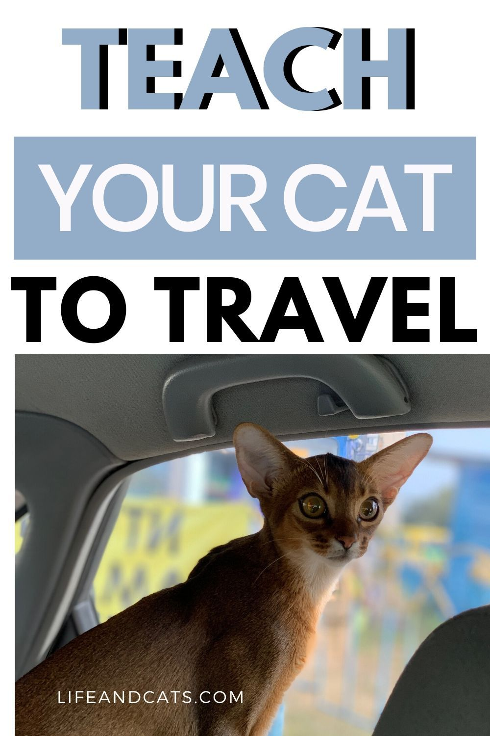 The Ultimate Guide To Traveling With Cats The Riding Around In Cars Edition In 2020 Cat Travel Road Trip Fun Pet Travel