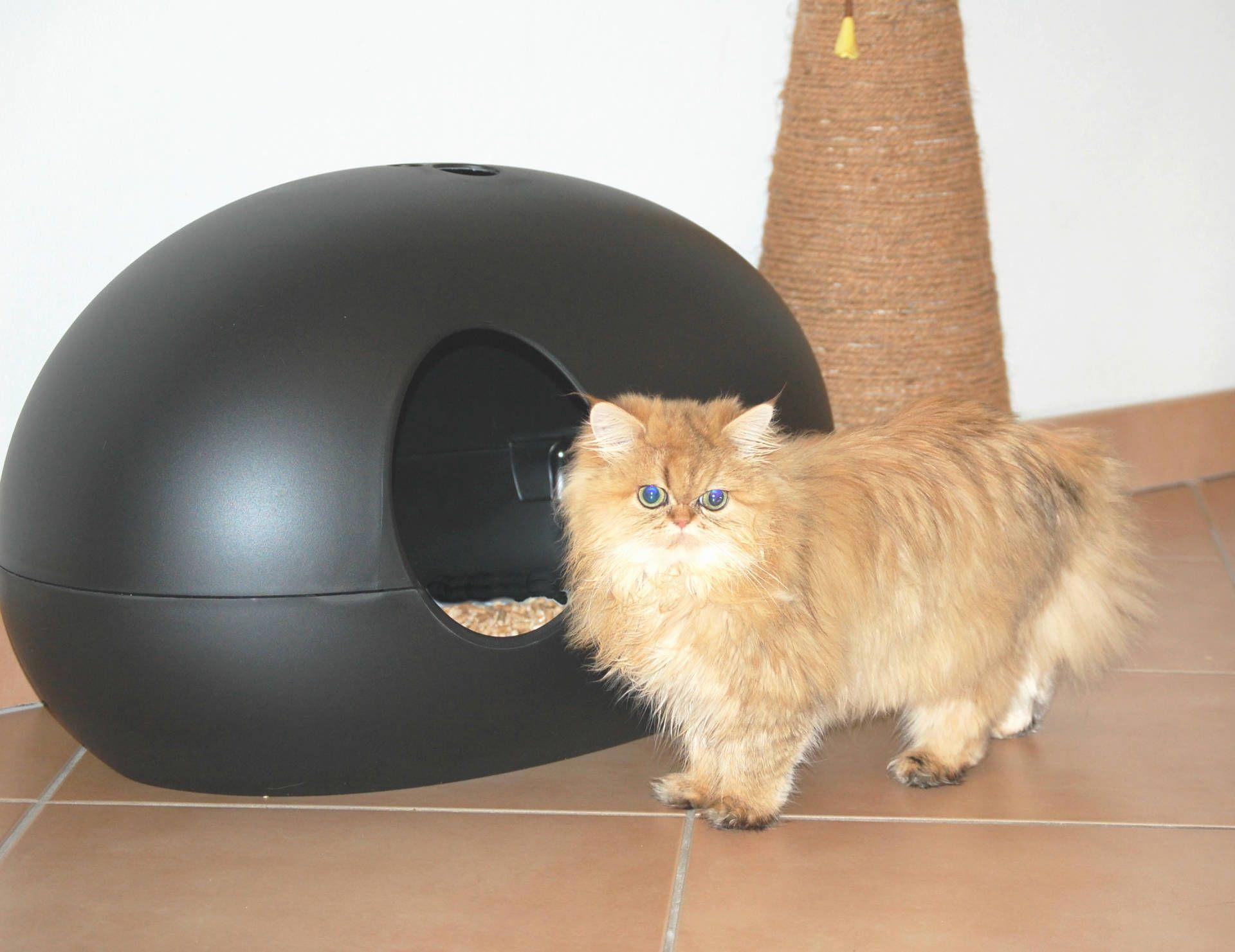 Cats In Apartments Cat Litter Box Genie Best Cat Litter Box Cat Friendly Apartment In 2020 Best Cat Litter Cats And Kittens Cat Litter Box