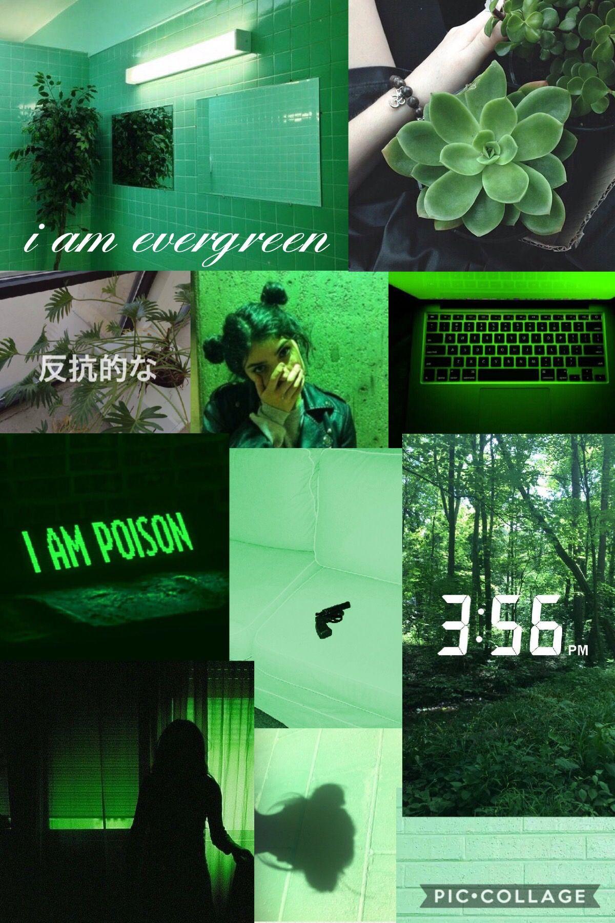 ɢʀᴇᴇɴ ᴀᴇsᴛʜᴇᴛɪᴄ Green Aesthetic Aesthetic Pastel