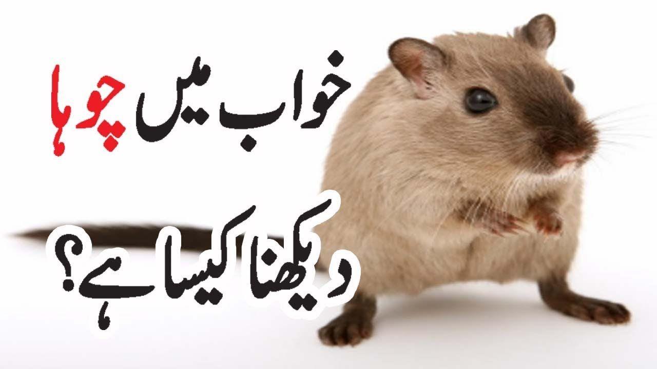 Khawab Ki Tabeer || Khawab Mein Chuha Dekhna Kesa Hy | khwab