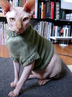 Green turtleneck. | hairless cats wearing nice sweaters ...