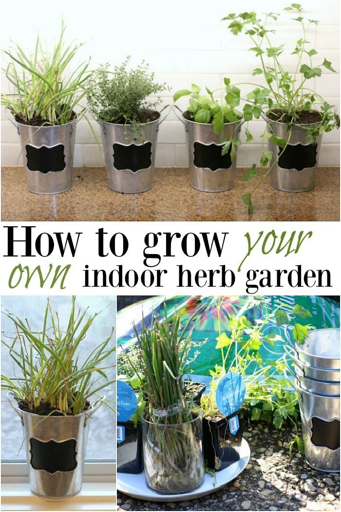 an indoor herb garden is great for extreme temperatures when it s too hot or cold outside to on outdoor kitchen herb garden id=48514