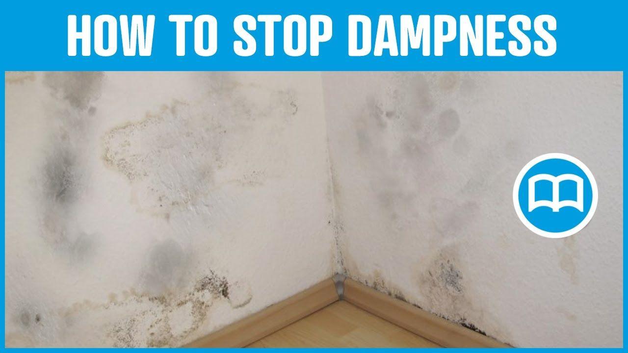 Damp Basement Smell Cure | http://dreamtree.us | Pinterest