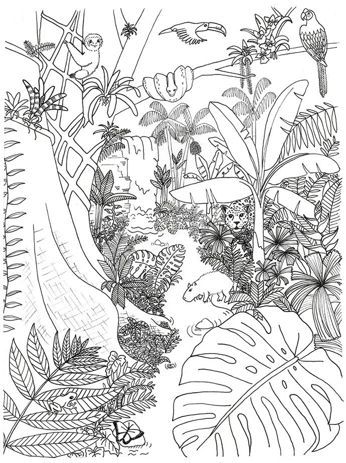 Rainforest Animals And Plants Coloring Page Animal Coloring Pages Animal Coloring Books Forest Coloring Pages