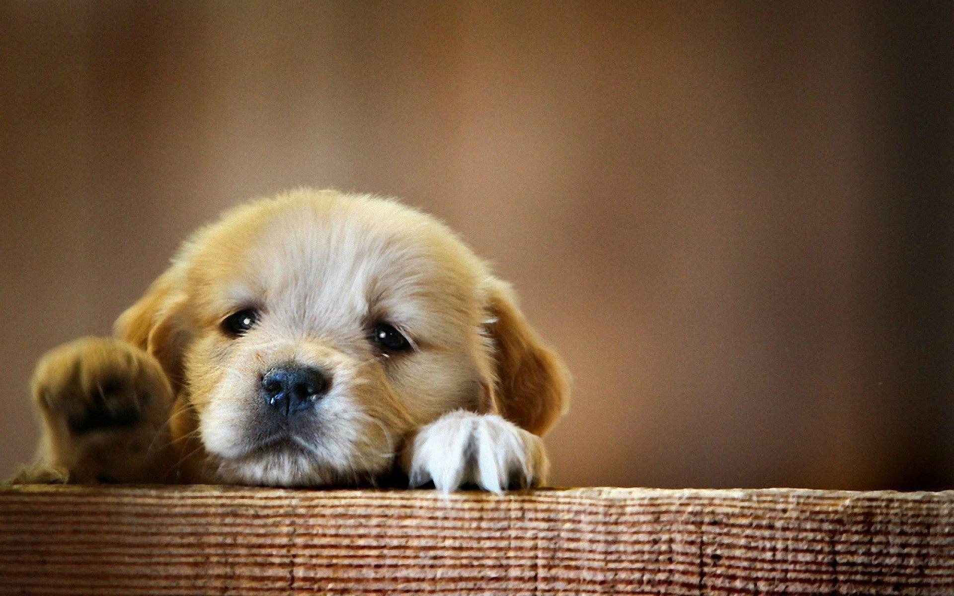 Best Of Puppy Desktop Backgrounds Cute Puppy Wallpaper Dog Wallpaper Cute Dog Wallpaper