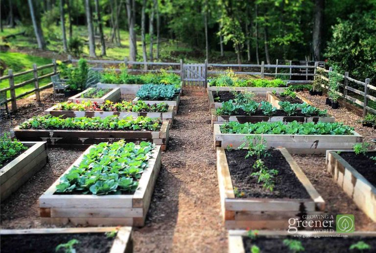 Three Key Benefits Of Gardening In Raised Beds Growing A Greener World Vegetable Garden Raised Beds Elevated Gardening Garden Layout Vegetable