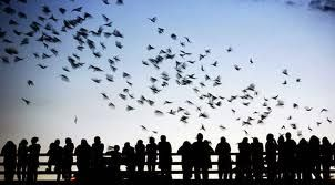 bats austin - Google Search