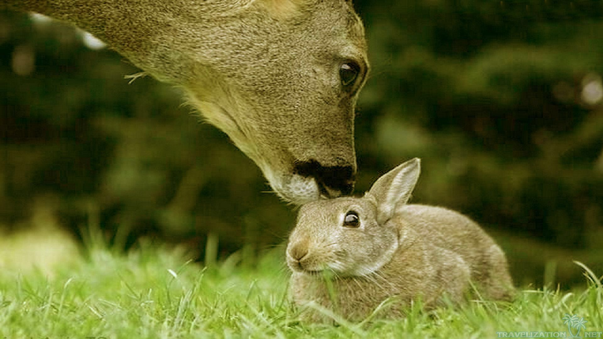 Image from http://wallpaperest.com/wallpapers/bunny-and-deer-cute-animals_087259.jpg.