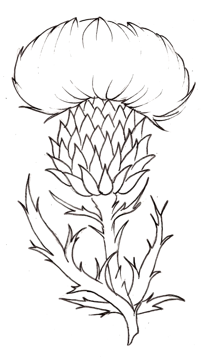Thistle A Thorny Plant With A Beautiful Flower The National Symbol