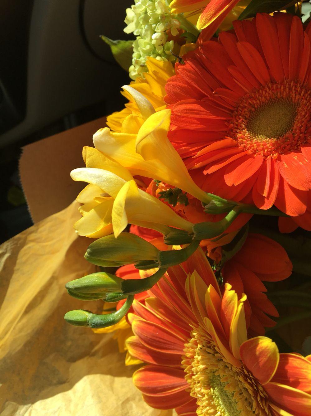 Yellow jingle bell flowers Flowers, Jingle bells, Jingle
