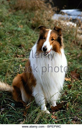 Agree, remarkable collie adult film star think, that