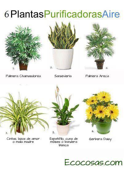 Seis plantas de interior recomendadas 1 palmera de bambu - Plantas de interior purificadoras del aire del hogar ...