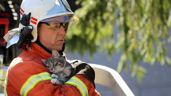 After three days on the tree, Minnie the cat finally got help from a lawyer. Kitten trusted her savior at first glance. Kotka, Finland