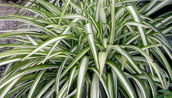 14 best indoor shade plants for low light rooms low lights and plants - Indoor plants for shade ...