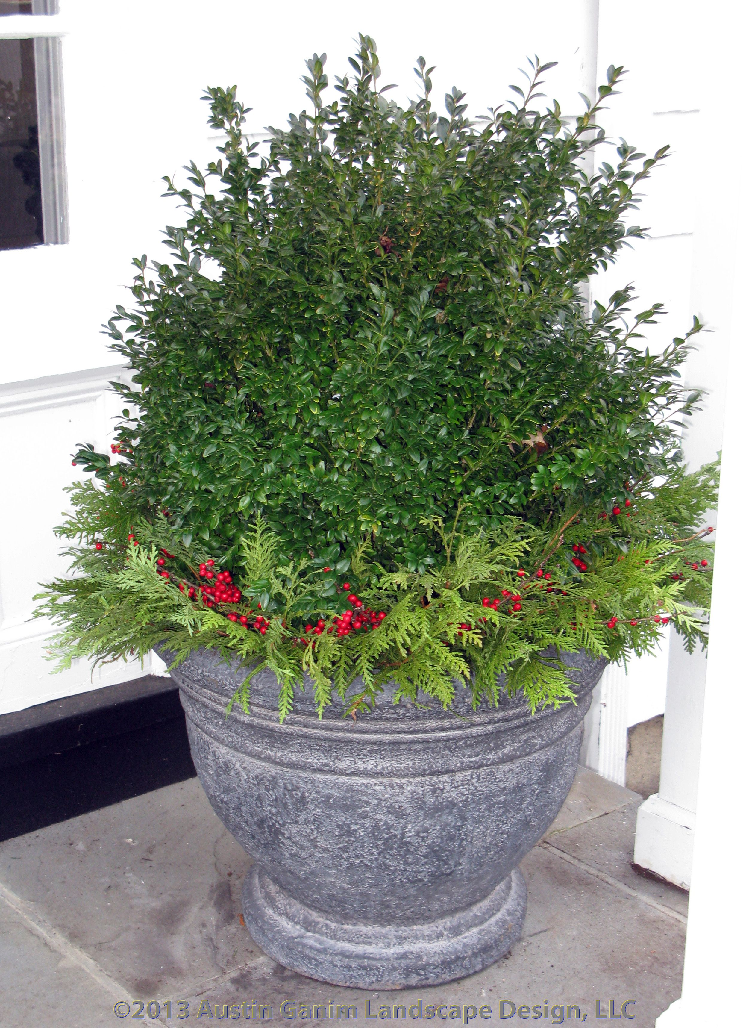Urban gardening planters - Spruce Up Your Existing Boxwood Containers With Some Holiday Greens And Berries