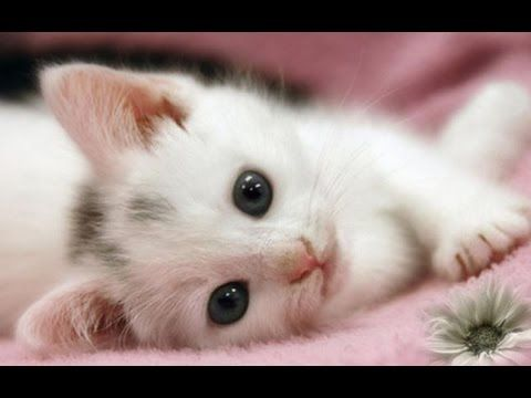 Top 10 Cutest Kittens Videos Compilation New Hd Cute Cat Wallpaper Kittens Cutest Cute Kitten Gif