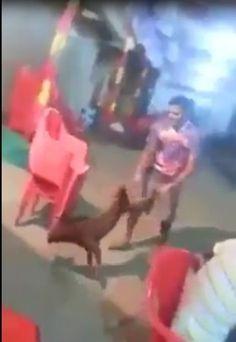 ✏ Maharashtra Man Attacked and Injured Defenseless Stray Dog! Demand Justice! | PetitionHub.org