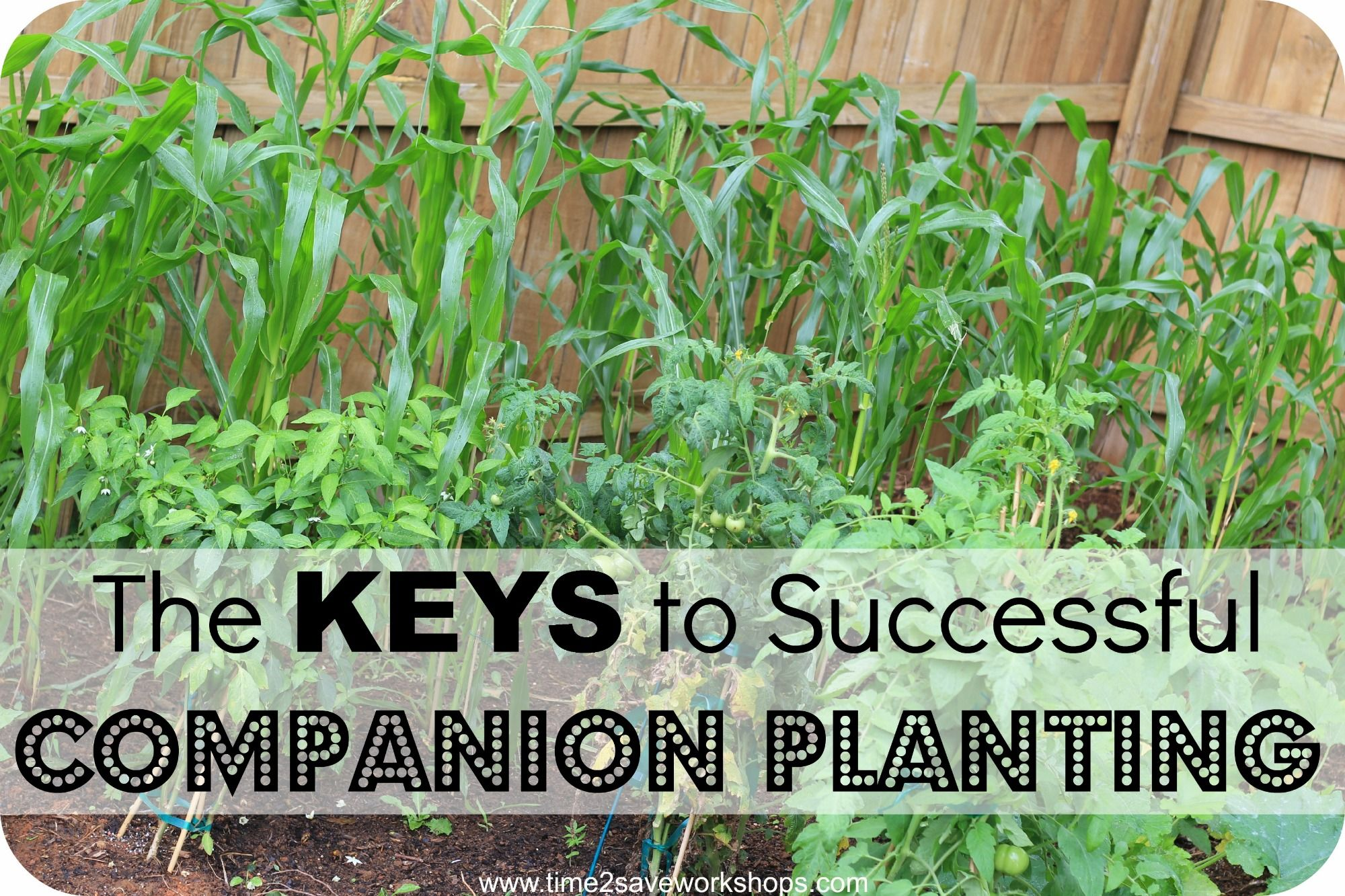 17 Best 1000 images about companion planting on Pinterest Gardens