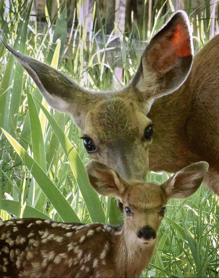 What a beautiful site: a mother and her young. This is truly proof of God's creation.