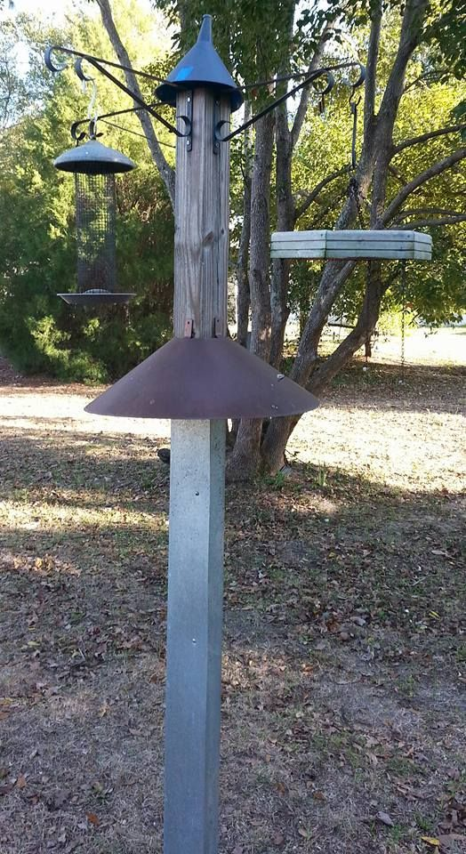 My 100 Squirrel Proof Bird Feeder Backyard Bird