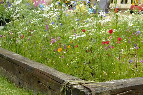 wildflowers in my back garden... Such a great way to encourage more nature into your garden. #homesfornature.