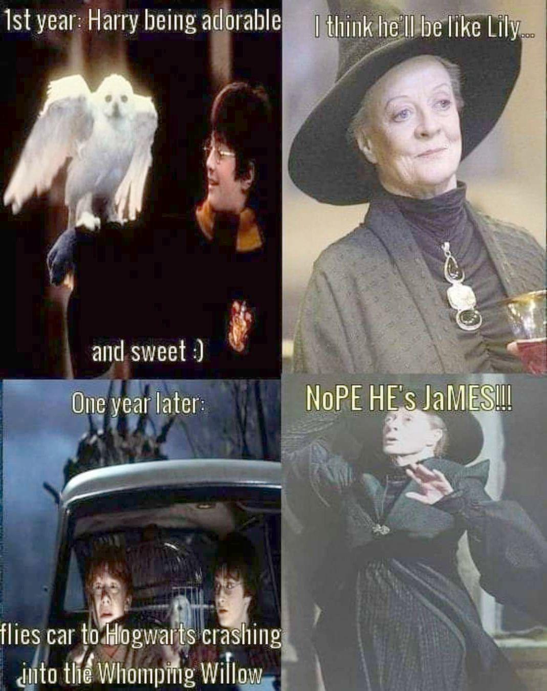 Top 23 Harry Potter Memes Goblet Of Fire Harry Potter Jokes Harry Potter Puns Harry Potter Universal