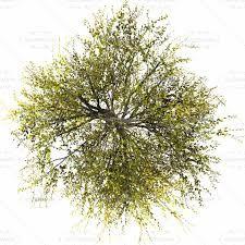 Resultado De Imagem Para Tree Png Top View Plants Desert Plants Trendy Plants