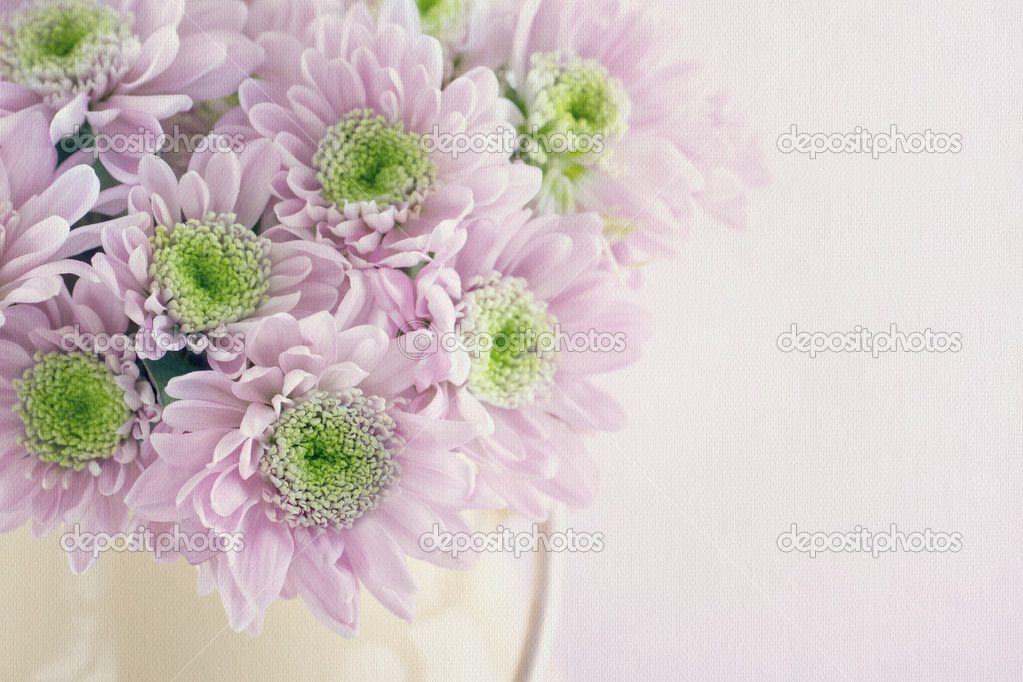 depositphotos_40266945-Purple-chrysanthemum-flowers.jpg (1023×682)