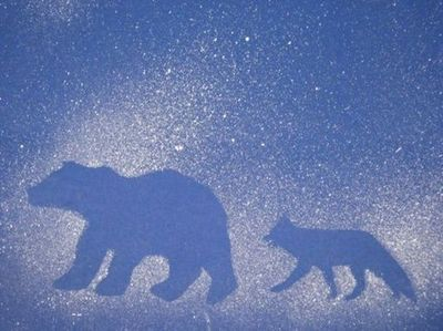 Arctic Animal splatter art using winter animal die cuts. Place cutouts of animals on poster board and dip a toothbrush into white tempera paint.