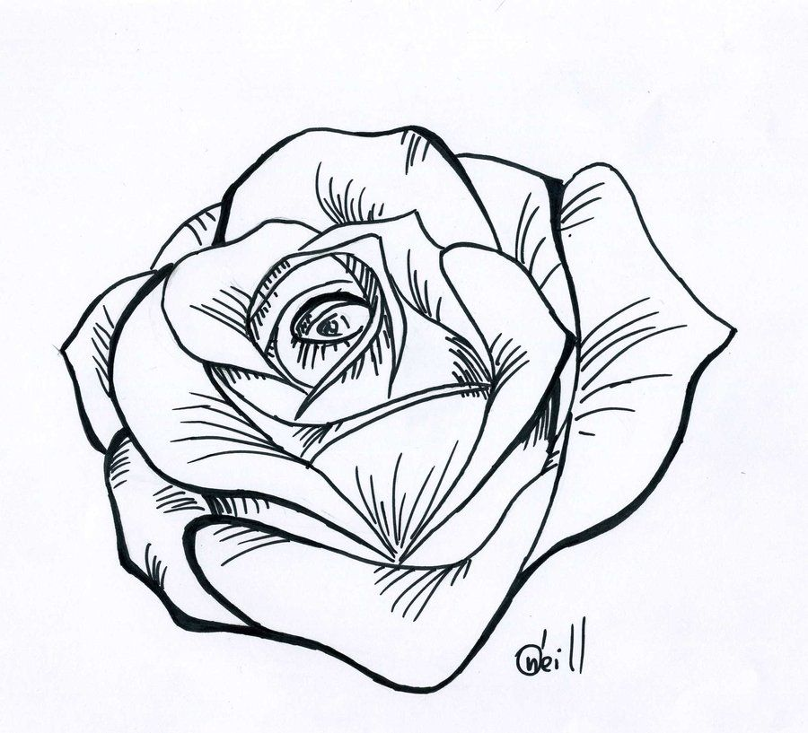 Line Drawing In C : Traditional rose line drawing cliparts