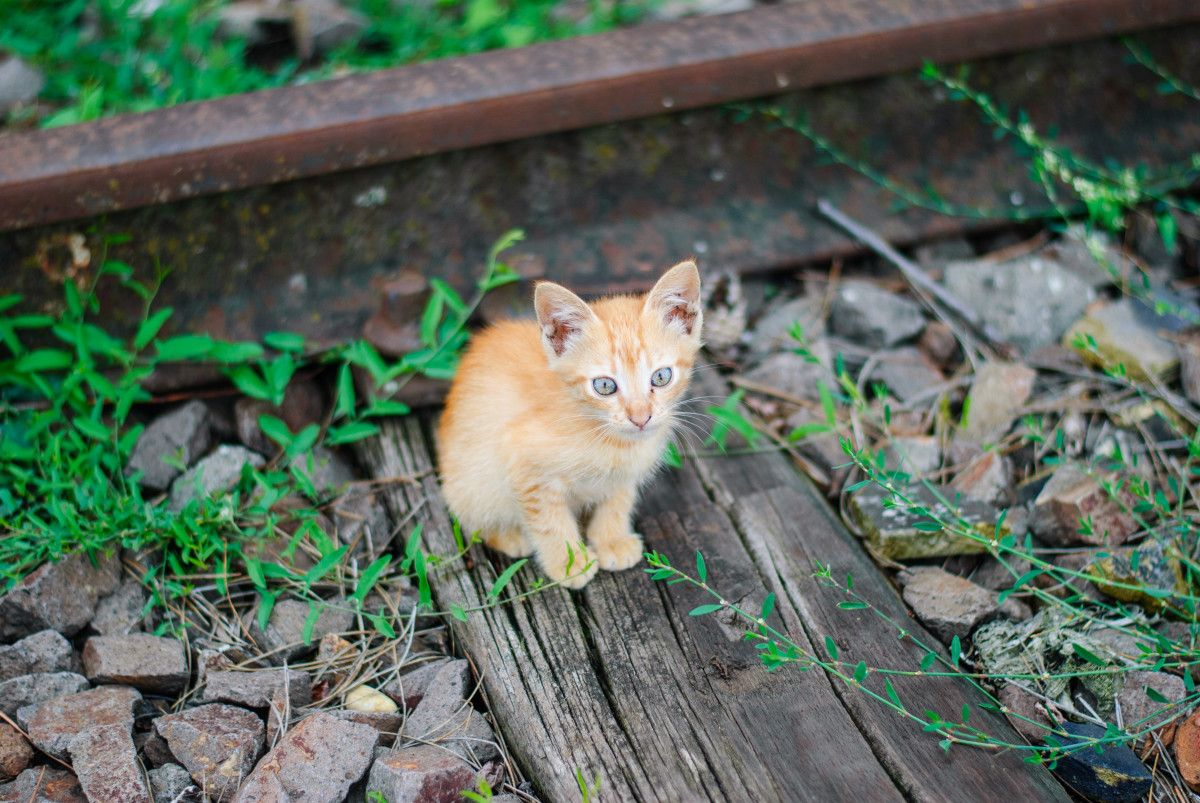 Train Operator Rescues Kitten That Fell On Subway Tracks In Manhattan Kitten Rescue Kitten Animals