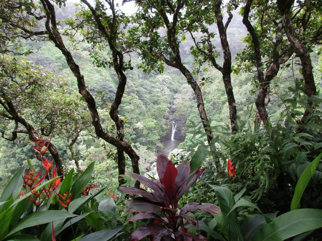 6146ce1b77345e6753d99d3d1e5419ab - Hana Maui Botanical Gardens Hana Hi