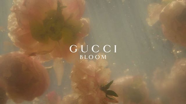 I Wanted A Rich White Floral Fragrance A Courageous Scent That Transports You To A Vast Aesthetic Desktop Wallpaper Cute Laptop Wallpaper Aesthetic Wallpapers