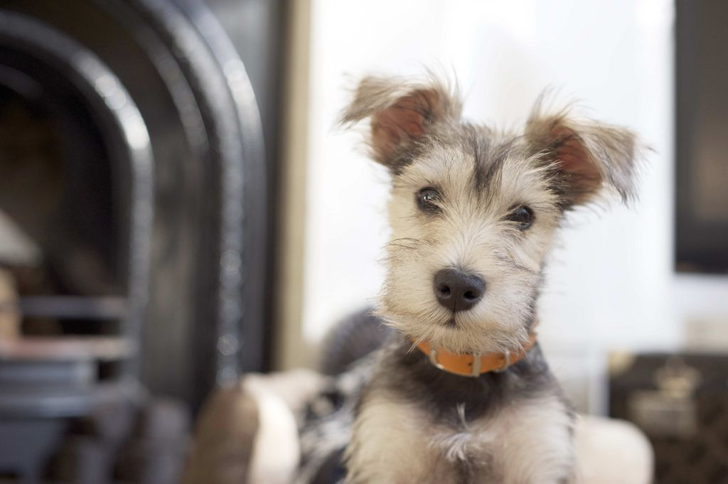 .cute terrier