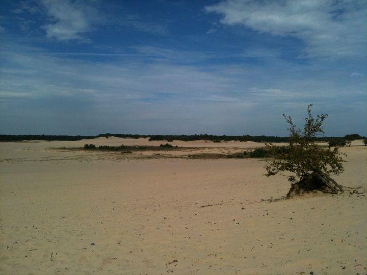 Nationaal Park De Loonse en Drunense Duinen in Drunen, Noord-Brabant