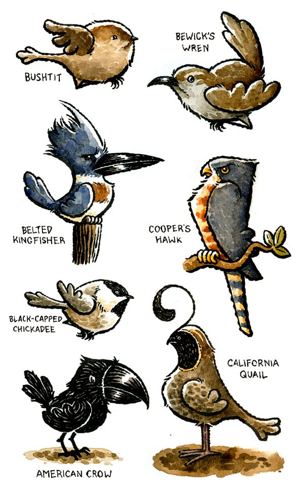 Birds of the Pacific Northwest | North west, Pacific ...