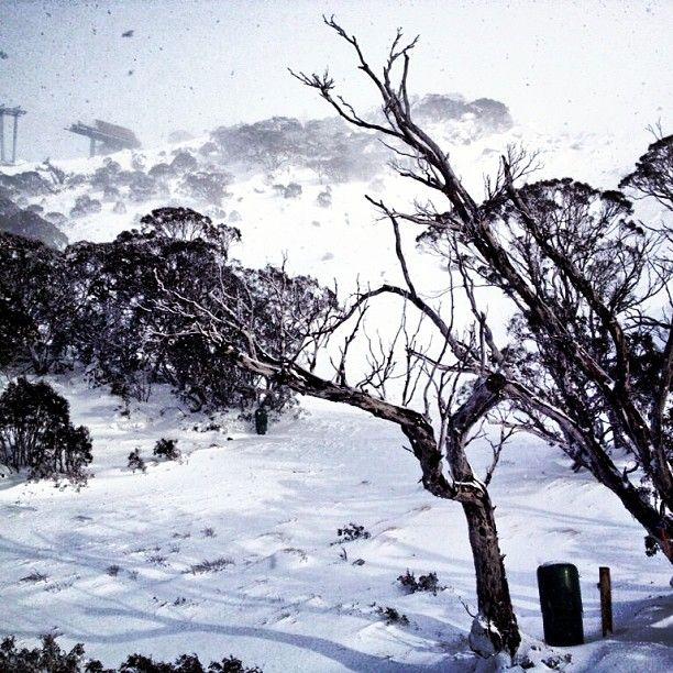 Best Places In The Us To Snowboard: Loving The Fresh Snow At #thredbo Today #snow #lovewinter