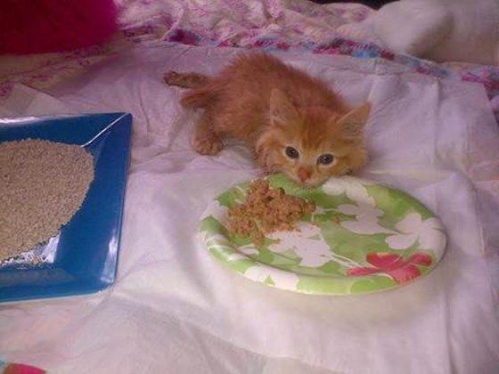 Paralyzed Kitten Due To Negligent Downey Vet Tech Medical Expenses Youcaring Vet Tech Adorable Kitten Vets
