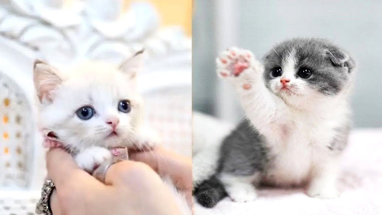 Pin On Cute Pets Video Compilation