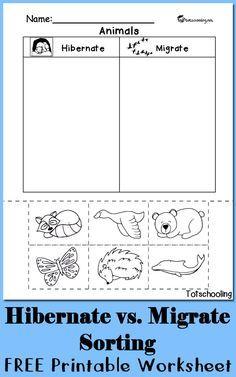 hibernation vs migration animal sorting worksheet hibernation pinterest kindergarten. Black Bedroom Furniture Sets. Home Design Ideas