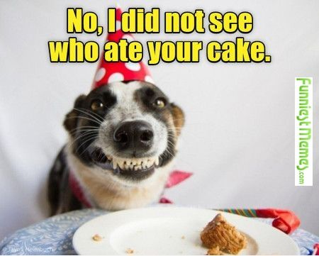 6149d8634899fa1ab7899225055de2b1 funny pictures no, i did not see who ate your cake birthdays
